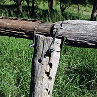 boonah fence post and wire square