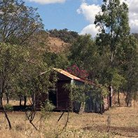 tim shed bougainvillea and hill cq square
