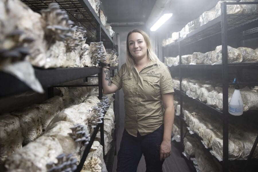 samford valley mushrooms will composting madi moreton daily